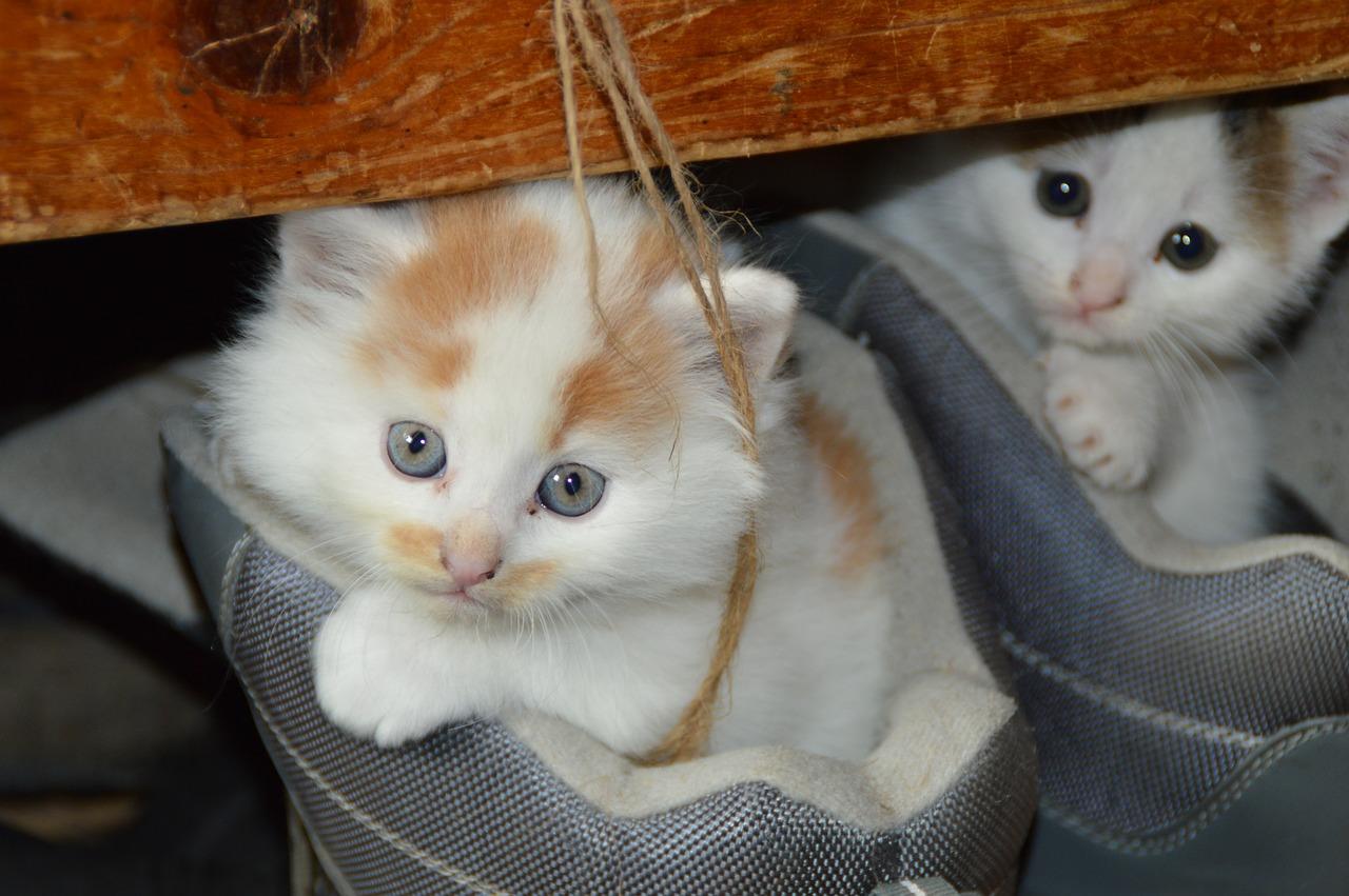 cica, macskatartás
