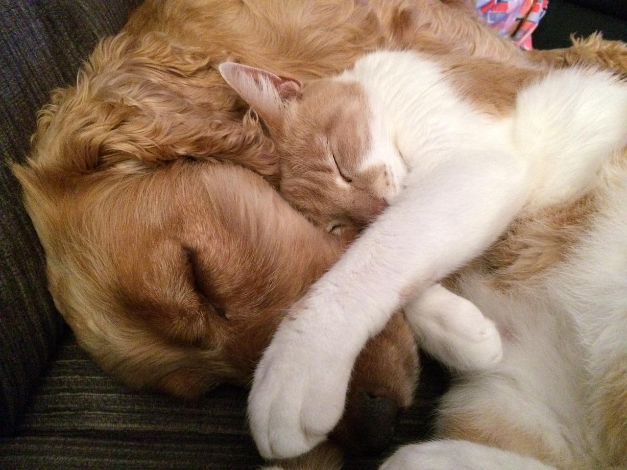 macska, cicabetegségek, kutya-macska barátság