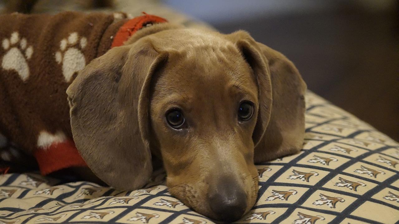 furcsa kutyatartási törvények
