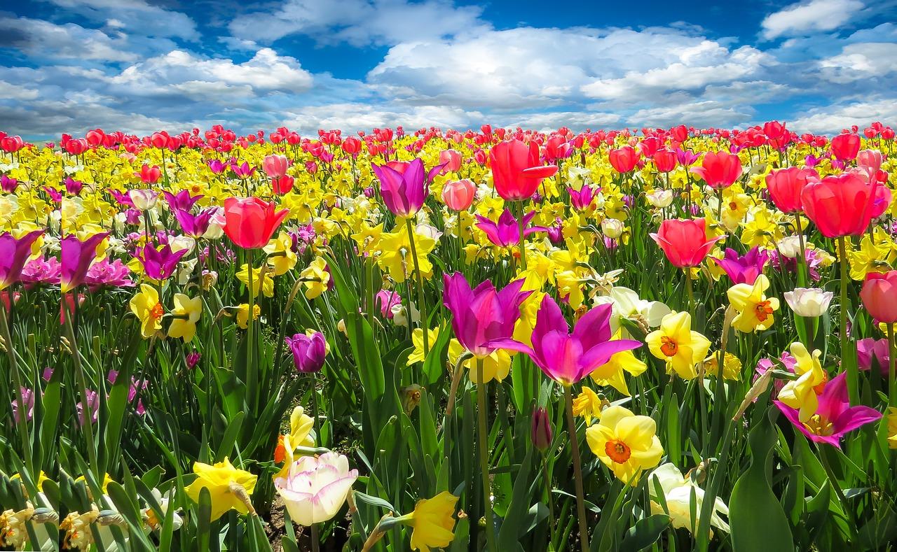 tavasz, tavaszi programok